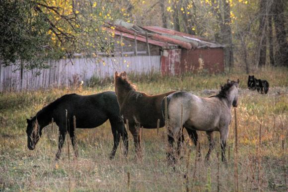 Horses Bears